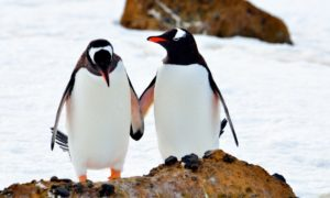 stock-photo-antarctica-penguins-let-s-be-friends-609598490
